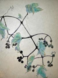 botanicals-garden-varieties-procelain-vine