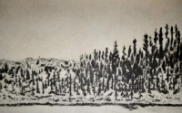 landscapes-black-spruce_0