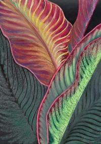 botanicals-calla-lily