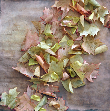 Fallen Leaves II – Detail